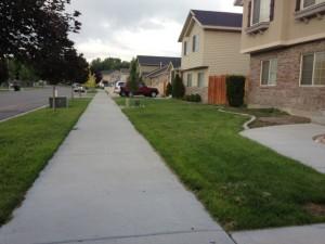 Alive Lawn
